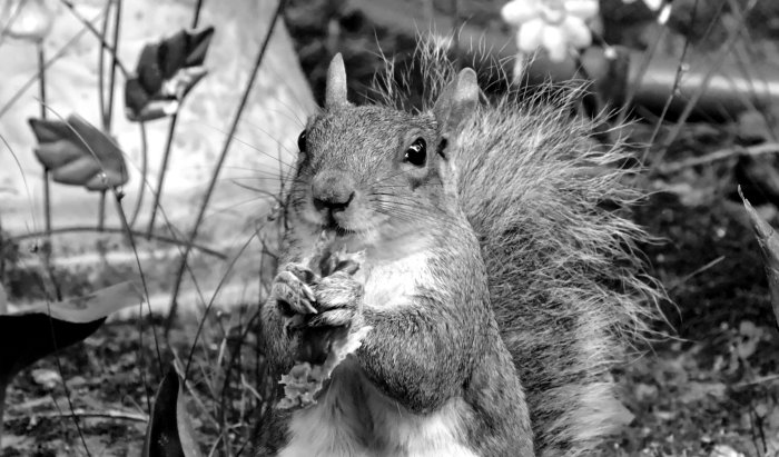 bwsquirrel