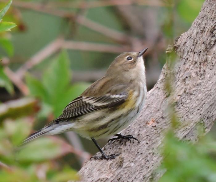 mysterybird