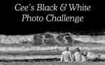 black-white-banner (1)