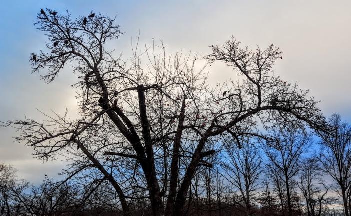 birdstreeynj
