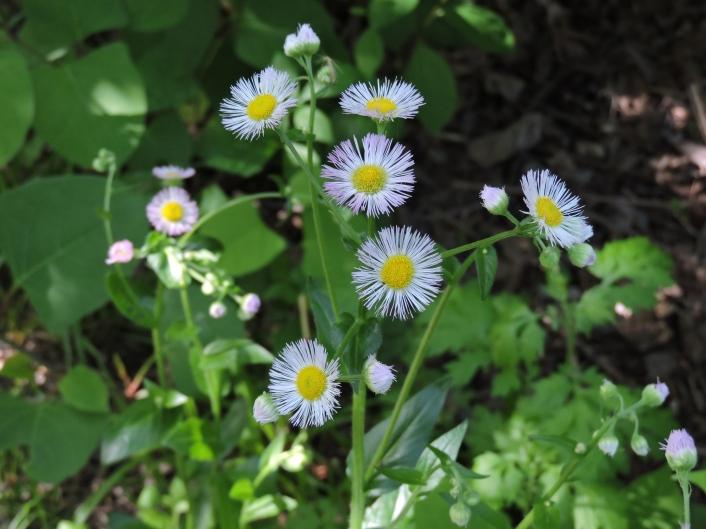 pinkishwildflower