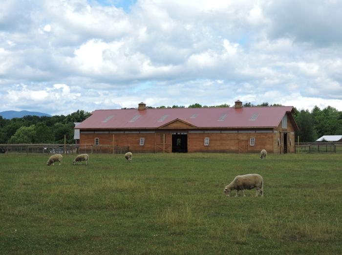 sheepgraze