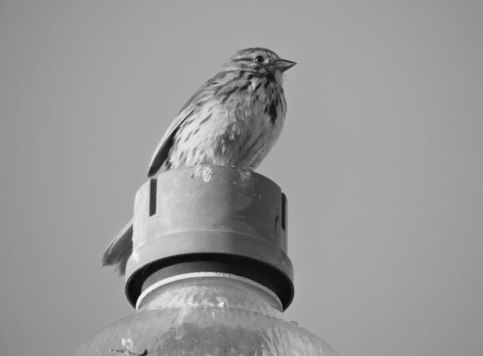 birdbw