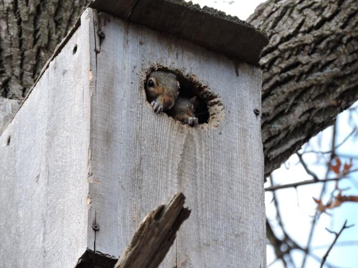 squirrel2peek